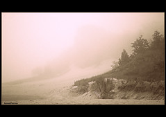 The Dunes (SannePhotos (S. Douthitt)) Tags: statepark trees mist beach fog sepia forest sand woods nikon dunes shoreline monotone lakemichigan shore indianadunes nationallakeshore d5000 sarahdouthitt sannephotos