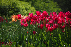 Long Wood Garden|Philadelphia (里卡豆) Tags: philadelphia ed olympus f18 ep3 75mm longwoodgarden