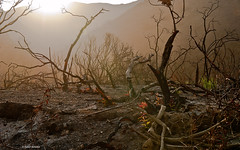 Eerie light over Sycamore Canyon (Photosuze) Tags: california light shadow mist mountains nature landscape eerie canyon sycamore santamonicamountains canyons burned sycamorecanyon treestumps afterthefire 2013 fireravaged californiatnc11