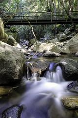 minnamurra falls   minnamurra national park   nsw   australia (Langthanee Photography) Tags: new bridge wales flow paul nikon long exposure south sydney parks australia national waterfalls rivers streams nikkor 1224mm langley minnamurrafalls minnamurrarainforest budderoonationalpark d7000 monthira