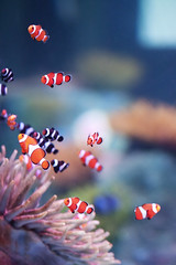 ocean life sea fish canon aquarium dallas texas nemo clown 5d grapevine saltwater markii animone