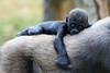 130727 Burgers' Zoo (JGOM) Tags: netherlands zoo arnhem nederland burgers burgerszoo dierentuin dierenpark burgersdierenpark