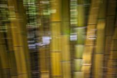 Bamboo (siebe ) Tags: flowers flower holland dutch utrecht nederland thenetherlands bamboo bloemen bloem bamboe 2013 botanischetuinen