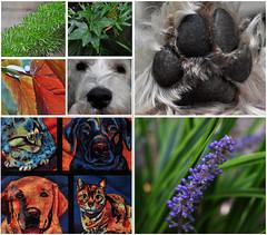 Nature Girl (BKHagar *Kim*) Tags: flowers plants dog pet pets dogs nature paw friend terry blooms bkhagar