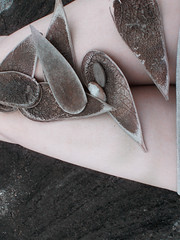 - (Estrela Comestível) Tags: brown white cute nature beautiful branco photography cool very natureza leg bonito fotografia perna marrom belo kawai