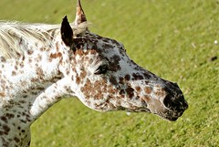 Horse (Gaia Miller) Tags: england horse nature animal animals nikon photographer oxford cavallo