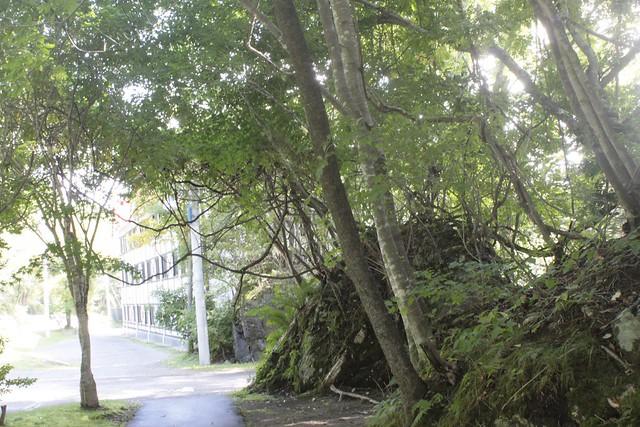 ホテルの近くをお散歩しました!本当に山の中なので(ホテル自。|