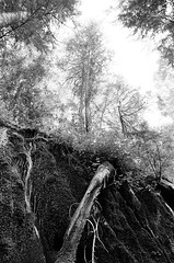 Up to the Heavens (IggyRox) Tags: trees usa west nature water up oregon forest waterfall moss heaven cascades pacificnorthwest lush umpqua douglascounty dreadandterror