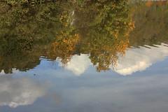 Autumn At The River (gripspix) Tags: autumn reflection nature river herbst natur fluss spiegelung neckar 20131018
