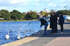 Swans Feeding Time! (Jainbow) Tags: people lake feeding canoe swans portsmouth southsea jainbow