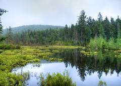 _DSC8020 (Upstate Dave) Tags: adirondacks beaverpond mooseriverplainswildforest