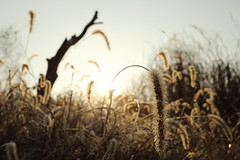 Dew drops (HDH.Lucas) Tags: morning nature lucas cannon gaze