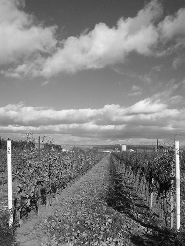 Jekel Vineyards Facing South