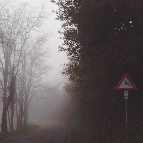 Il momento #ptitzelda23 è la passeggiata mattutina nel nebbione. Oh, com'è bella la nebbia (se presa con moderazione). | #ptitzelda2013 #ptitzelda13_roro #zeldawasawriter