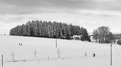 Verticals to start a Brueghel (miramann) Tags: schnee winter bw snow landscape couples wald bume schwarzwald blackforest fichten kabel huser wegen breughel gehft 5265 fortorbakhopper miramann tannoberleitungen someblueforapainter
