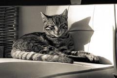Racoon (Ren Maly) Tags: cat crossprocessed xprocess kat feline crossprocess hc110 olympus om10 zuiko c41 43570 renmaly