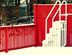 Poolside 1/31/14 (dianecordell) Tags: winter red snow cold birds j