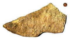 The biggest rock shaped like a shoe so far (★keaggy.com) Tags: rock stone found shoe stlouis collection missouri keaggy indianheadpenny rockshapedlikeashoe