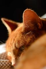 Gatoss1 (Nando Piakka) Tags: cats animals occhi felini gatti