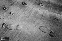 Best Friends (Mandy Jervis Photography - Beady's World) Tags: friends feet walking sand tracks footprints marks prints paws walkies