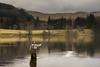 PikeMar13_0003 (Cap'n Fishy) Tags: pikefishing