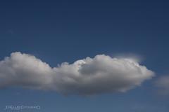 IMG_27179 (surluis) Tags: nube algodón azul cielo