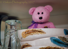 I Can See Everything From Up Here (HTBT) (13skies) Tags: happyteddybeartuesday bear teddybeartuesday dishes cupboard hiding problem scaring glass higher up upthere feather sneaking htbt