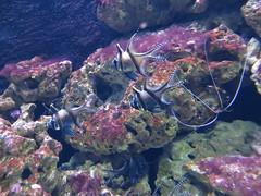 00734932 Aquarium Berlin 1 - 2017 (golli43) Tags: aquariumberlin zoo fische krokodile quallen wasser wasserpflanzen amphibien insekten unterwasserwelt