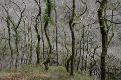 2JAC3277_exmoor_170313 (_husky_) Tags: devon exmoor exmoornationalpark fuji1655 fujixt1 nationaltrust somerset watersmeet