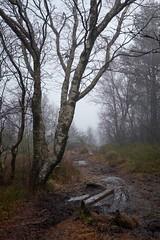 Into the mist, Norway (Vest der ute) Tags: xt2 norway rogaland haugesund djupadalen trees mist fog haze walkingpath rocks