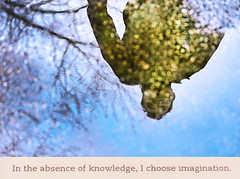 I Choose Imagination (kirstiecat) Tags: thebonesofgrace tahmimaanam novel literature book reading reflection puddle trees bokeh friend imagination magical light outside read fiction