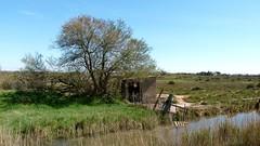 L'abri près du tamaris (brigeham34) Tags: marchepromenade rsv mars printemps lagrandemaïre espacenaturelprotégé paysage campagne nature canaux pâturages tamaris roseaux abri barrières portiragnes hérault occitanie france eu fz45