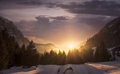 Glow (ツ French | Portrait & Adventure ✔) Tags: d810 fullframe nikon landscape dawn rock sunfall sunrays tree forest snow winter france 14mm kirawashere