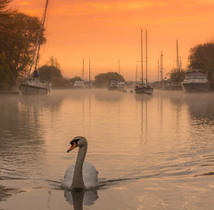 Morning on the River (Peter Quinn1) Tags: muteswan swan wareham riverfrome mist misty mistyriver morning dawn sunrise yachts boats sailingboats