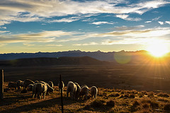 NZ sunset (rofaracoph) Tags: nature new zealand newzealand mountainadventures campingtrip discoverportrait earthexperience neverstopexploring natureaddict passionpassport awesomeearthpics theglobalwanderer nzmustdo travelnewzealand destinationnz earthdiscoveries earthlandscape lonelyplanet instamountain newzealandguide heatercentral way2ill naturelovers artofvisuals fatalframes exploringtheglobe roamtheplanet landscapecaptures realmiddleearth reflection hallazgosemanal primerolacomunidad glorious autumn trees natureza outdoor serene plant foliage texture
