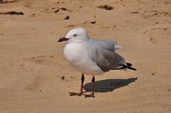 DSC_7180 (Tim Beach) Tags: great ocean road melbourne victoria australia port fairy twelve 12 apostles princetown apollo bay beach sea water