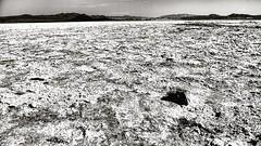 Dry Salk lake #zzyzx (Desautomatas) Tags: instagram desautomatas foto photo dry salk lake zzyzx