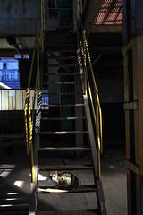 In the gloom (wesp2011) Tags: stair cat gloom darkness sunrays esdalera penumbra gato rayosdesol