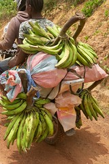"Plantains on the road. Sanniquellie. Liberia  March 2017 #itravelanddance • <a style=""font-size:0.8em;"" href=""http://www.flickr.com/photos/147943715@N05/33509722932/"" target=""_blank"">View on Flickr</a>"