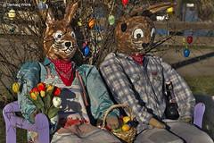 Rabbits (GerWi) Tags: ostern easter chick kücken couple hasen osterhasen schaf