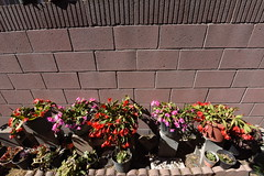 Our Blooming Spring Cactus Collection (SCSQ4) Tags: