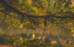 branch_reflection (1 of 1) (Ashique Ridwan) Tags: natural noir land dusk daytime dhaka bangladesh dhanmondi lake reflection green branch leaves water soil sun evening springtime light trees new asian