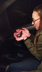 Spotted Salamander Migration - Part II (Matt Champlin) Tags: friday tgif salamanders help care animals love amphibians migration spring springtime rain rainy life nature landscape adventure 2017 sca skaneatelesconservationarea cny fingerlakes