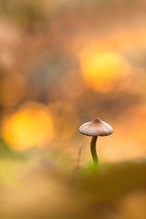 Lumière sur la ville. (SweeP_64) Tags: champignon mushroom macro proxi forêt forest nature cyrille masseys 6ril lumière sur la ville