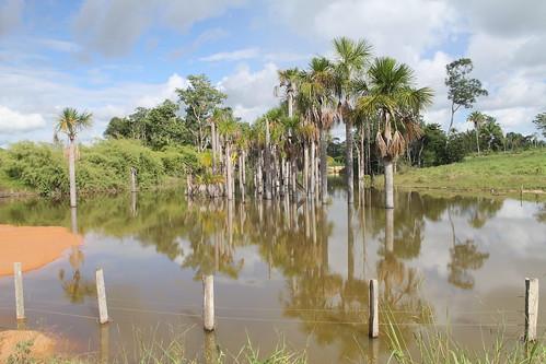 TFA 2020 GA Field Trip Alta Floresta Mato Grosso