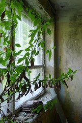 Betonkoks (Telefontubbie) Tags: concretetree abandoned jelgava industrial green decay