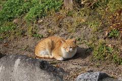 IMG_6021 Karatsu Castle stray cat (drayy) Tags: karatsu castle karatsucastle japan saga sagaken sagaprefecture matsuura stray cat straycat cute thebiggestgroupwithonlycats ggg 日本 佐賀 佐賀県 唐津 唐津城 城 景色 松浦 猫 野良猫