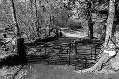 Shadows of a Kissing Gate (Brian Travelling) Tags: blackandwhite tones mono monochrome chrome