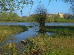 Framlingham Castle 3 (pocahontas1975) Tags: framlingham spring flowers flores england suffolk sun woodwork mere castle landscape tree