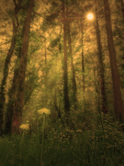 P1080586_DxO_PP (DouxVide) Tags: france gx8 mft m43 bearn pyrenees nature foret woods sunray dandelion trees flowers sunstar sunburst sun daylight dark atmosphere retouching landscape aquitaine nouvelleaquitaine forest bois dreamy
